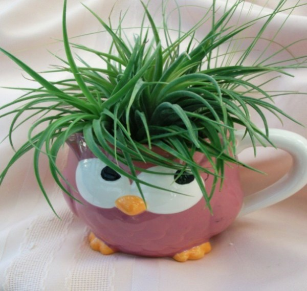Air-Plants-for-Tiny-Houses-by-Linda-Branch-003
