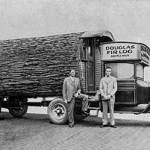 Before Chainsaws Tree Trunk Tiny House On Wheels 5