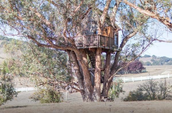 Multi-Level Treehouse in 110 ft. Eucalyptus Tree-002