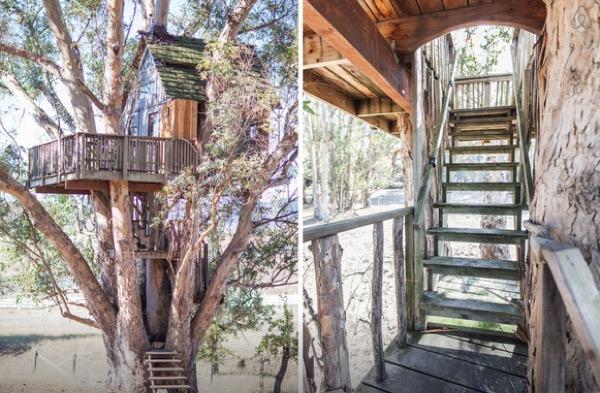 Multi-Level Treehouse in 110 ft. Eucalyptus Tree-003