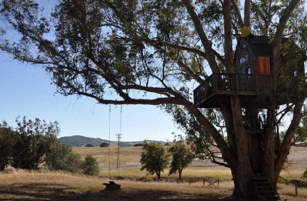 Multi-Level Treehouse in 110 ft. Eucalyptus Tree-019