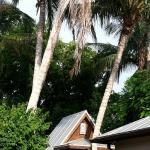 False Realities of Tiny House Living