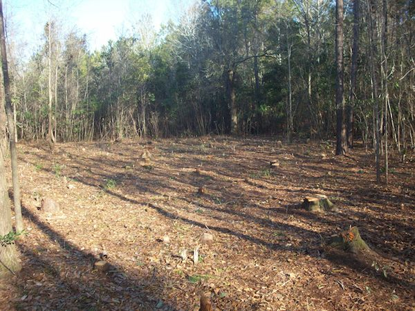 Clearing Land for Tiny House on a Trailer