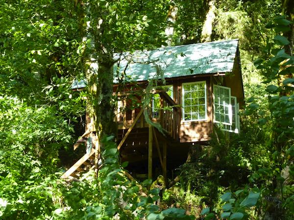 Close Up of Tiny Cabin in the Woods