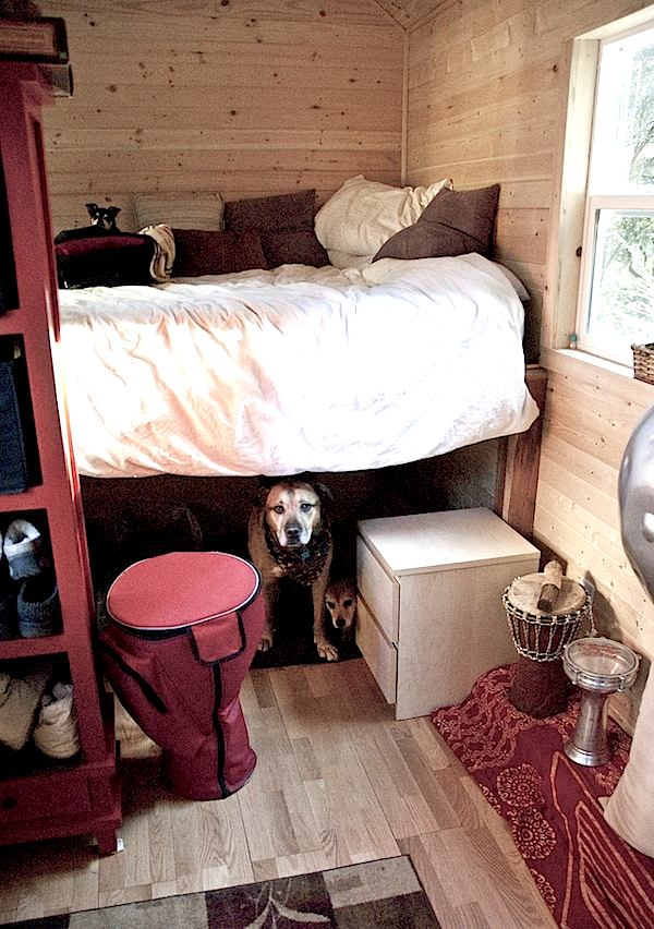 QA Tiny Houses and Pets Big dogs in a Tiny Home