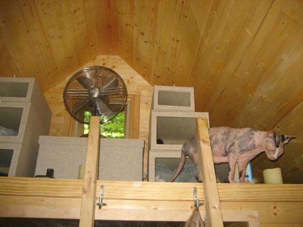 Our storage loft featuring Piglet. Photo by Laura M. LaVoie