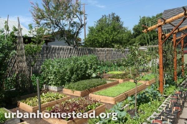 urban-homestead-family-in-la-tiny-organic-farm-002