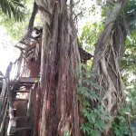 woman-who-raised-3-children-in-DIY-tree-house-001