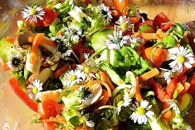 Foraged daisies added to a garden vegetable salad