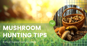Mushroom Hunting Tips