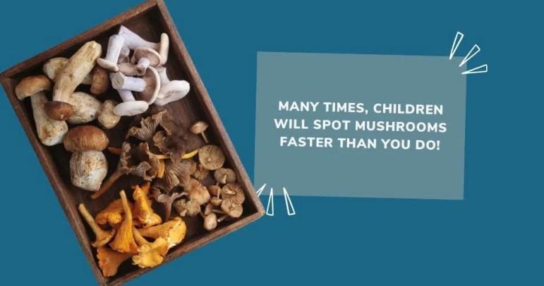 Children help with mushroom hunting
