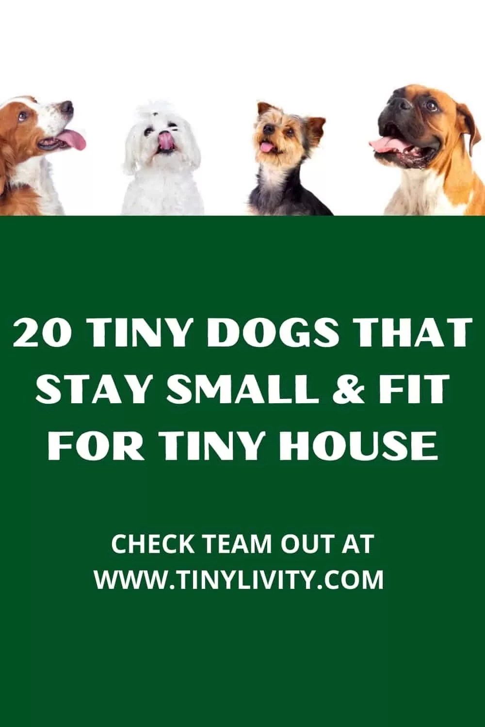 20 Tiny Dogs That Stay Small & Fit for Tiny House