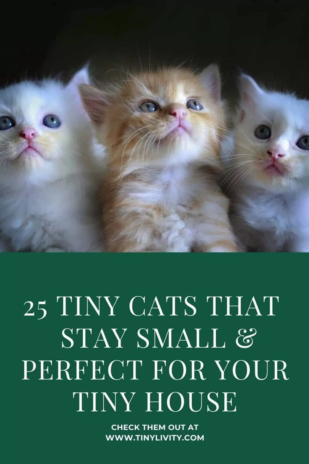 25 Tiny Cats That Stay Small & Perfect for Tiny House
