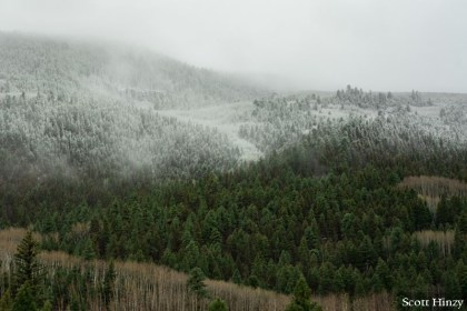 Snow in Rio Grande National Forest