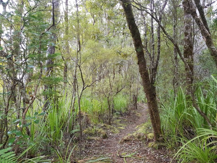 Puketi Forest Te Araroa Trail