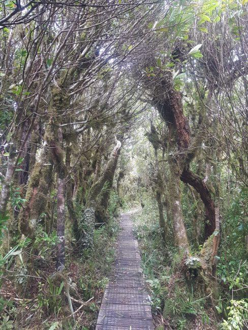 Te Araroa Trail Pirongia