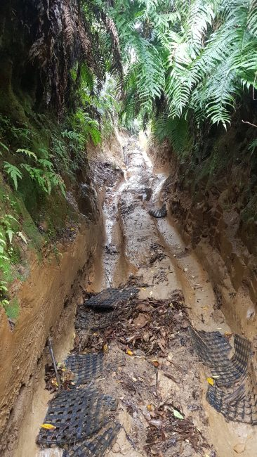 Te Araroa Trail Waione-Cokers track