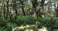 Te Araroa Trail Day 108 - Takitimu track