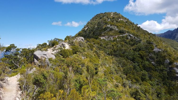Te Araroa Trail Day 119 - Skyline ridge track