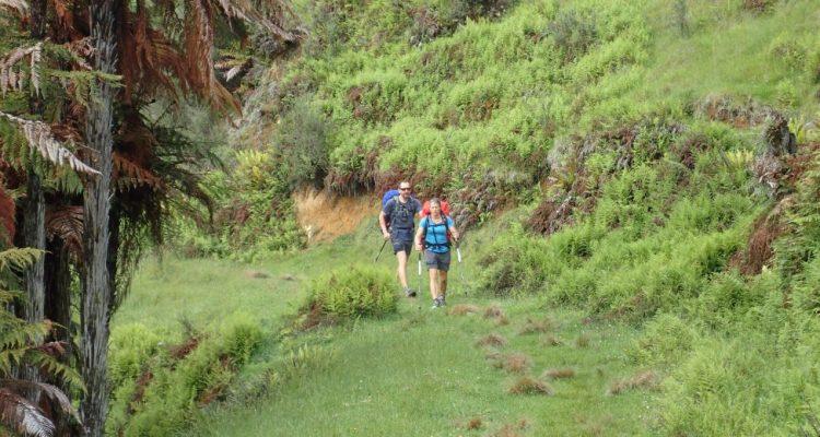 Te Araroa Trail Fishers Track