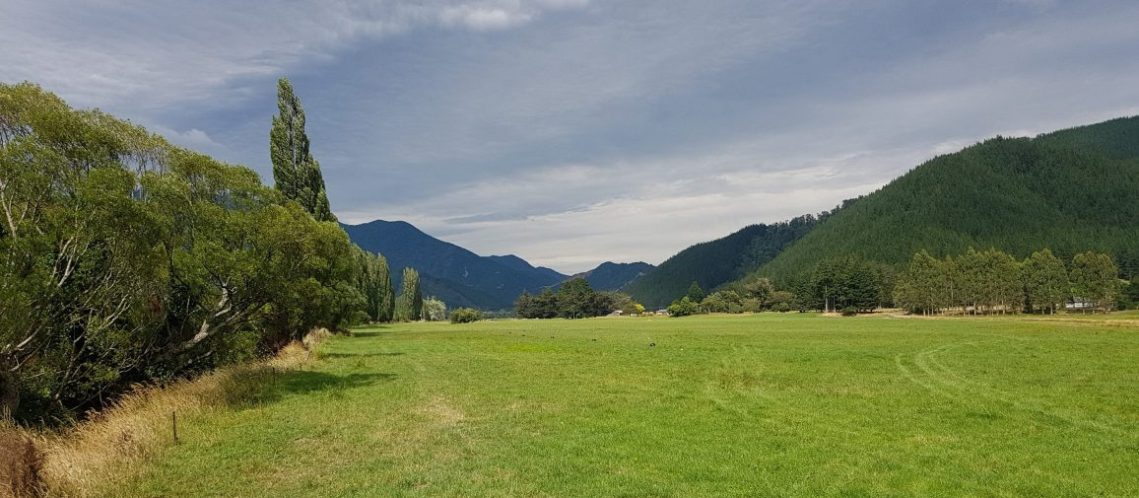 Te Araroa Trail Day 79 - Daltons Track