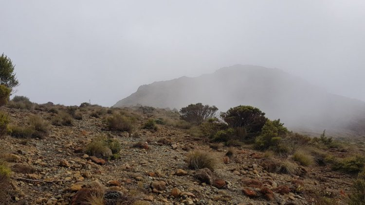 Te Araroa Trail Day 82 - Foggy start to the morning between Rocks hut and Dun Mountain