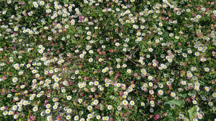 A beautiful wall of flowers
