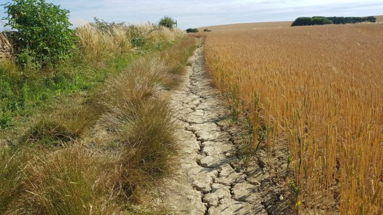 Dry, cracked earth - we've had no rain for weeks