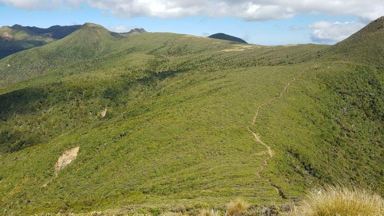 Henry Peak looking Kaiauai track Pouakai hut