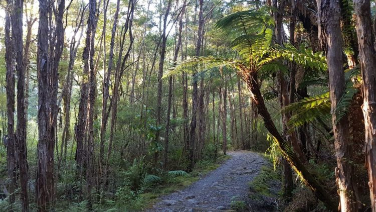 A beautiful start to the Heaphy Track from Browning hut