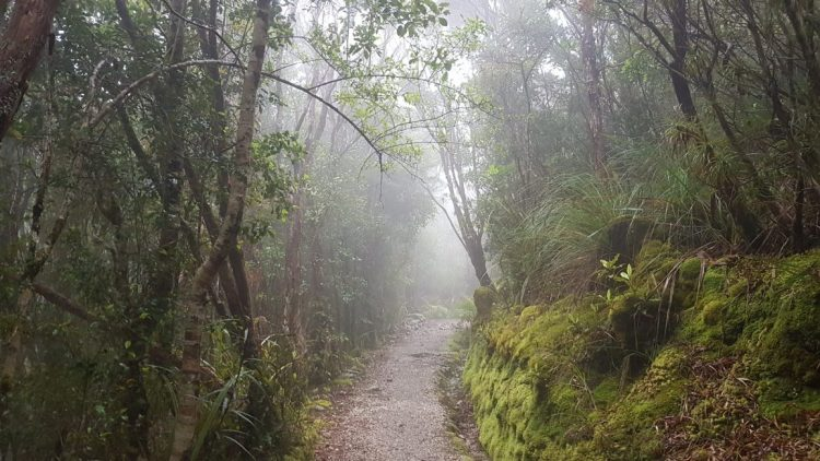 Misty forest near James Mackay hut - Heaphy Track