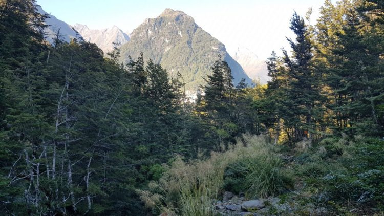 A glimpse towards the Routeburn