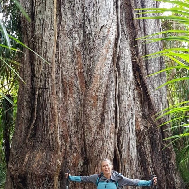 Tinytramper next to the Huge rata tree on the Heaphy Track