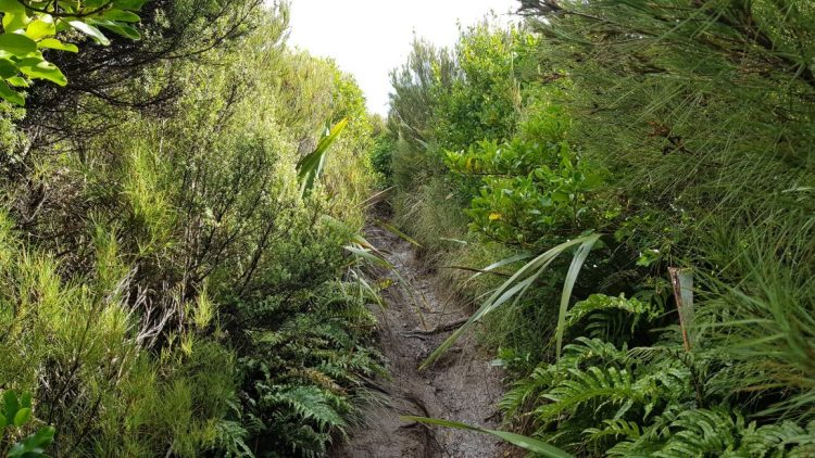The wet path