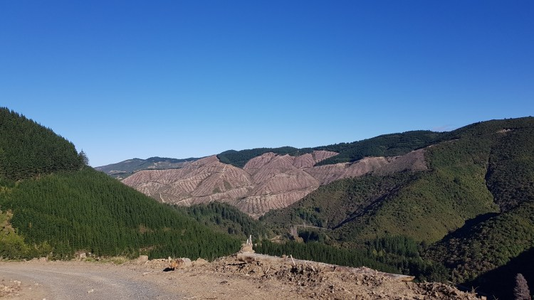 Views from Old Summit Road across the forestry blocks