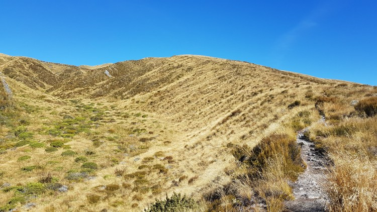 The beautiful ridge track towards Sentinel Hill