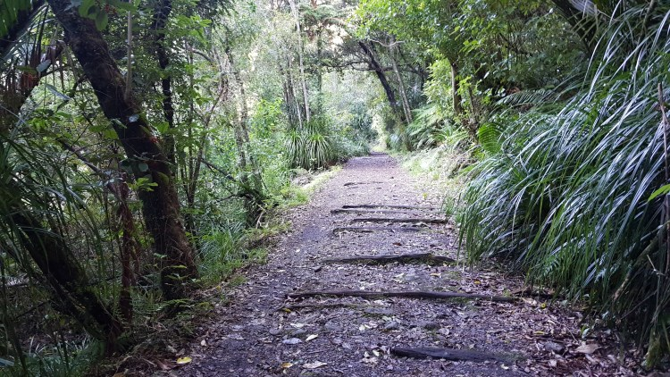 A gentle start to the Charming Creek Walkway