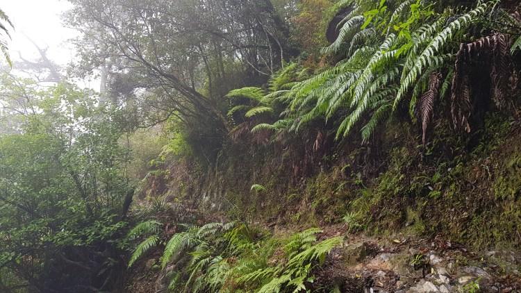 Rainy Nydia Track