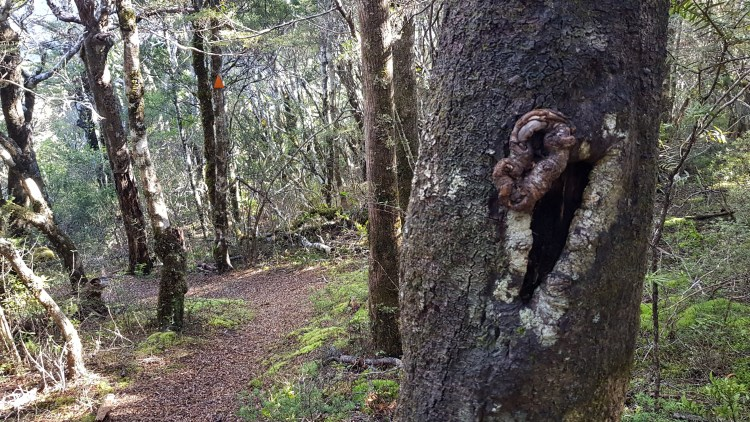 Fabulous examples of a trail blazes - in the tree and orange triangle