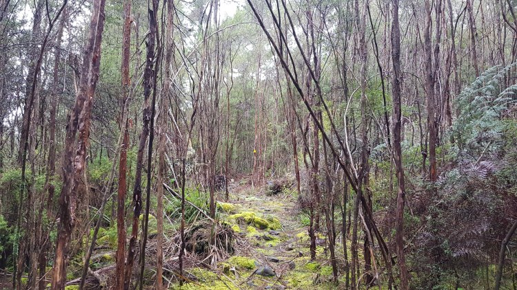 A mossy section before descending to the Hacket Track
