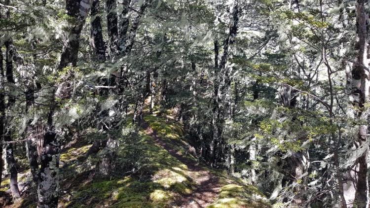 Mt Misery track