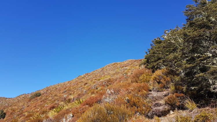 Reaching the tree line on Mt Misery