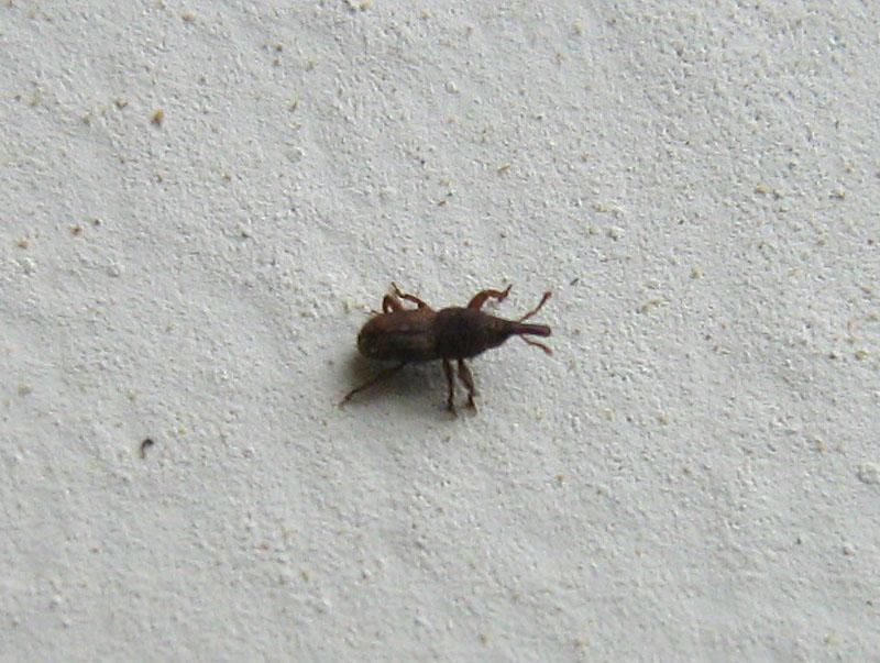 house bugs identifier Gallery