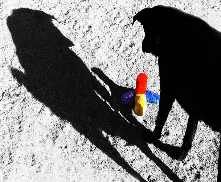 Photo by Melissa Spurr of black dog with shadow and colorful toy