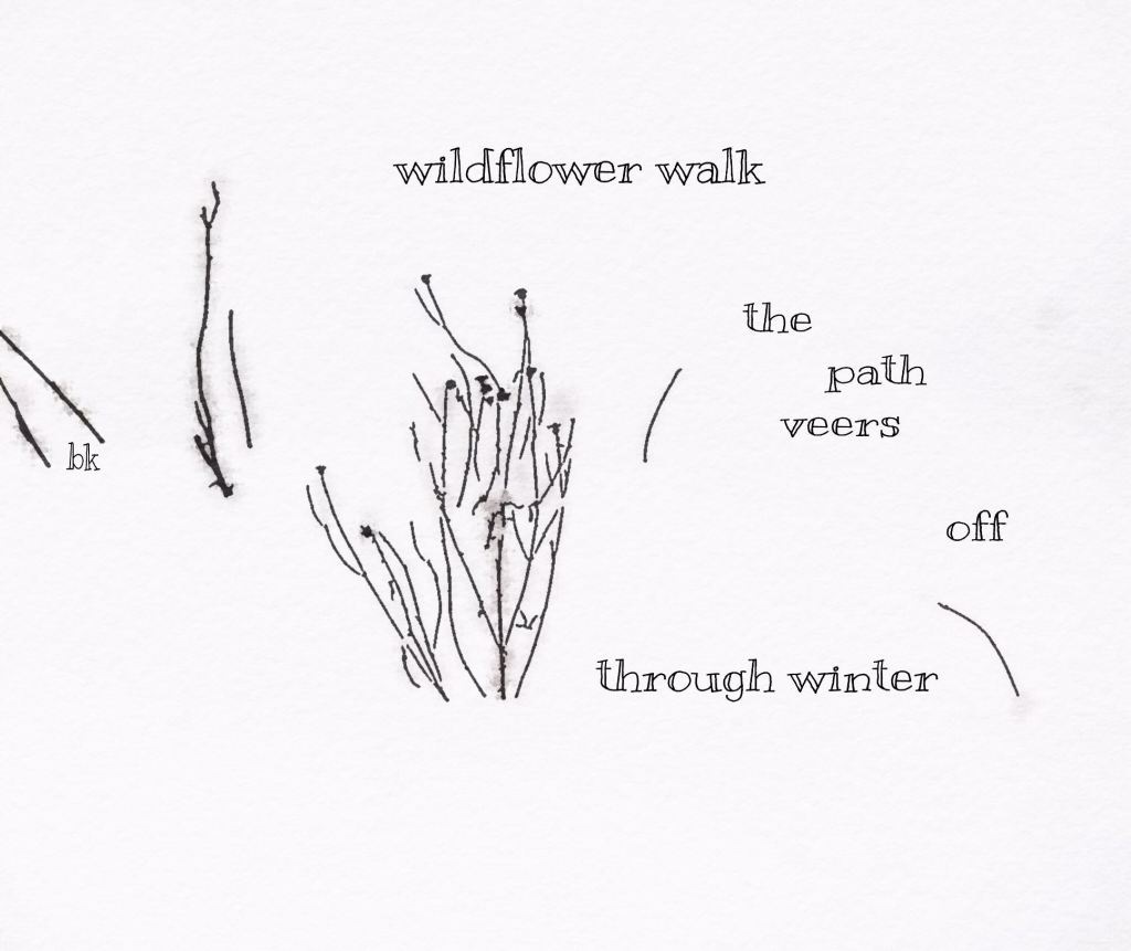 wildflower walk: haiga by Barbara Kaufmann