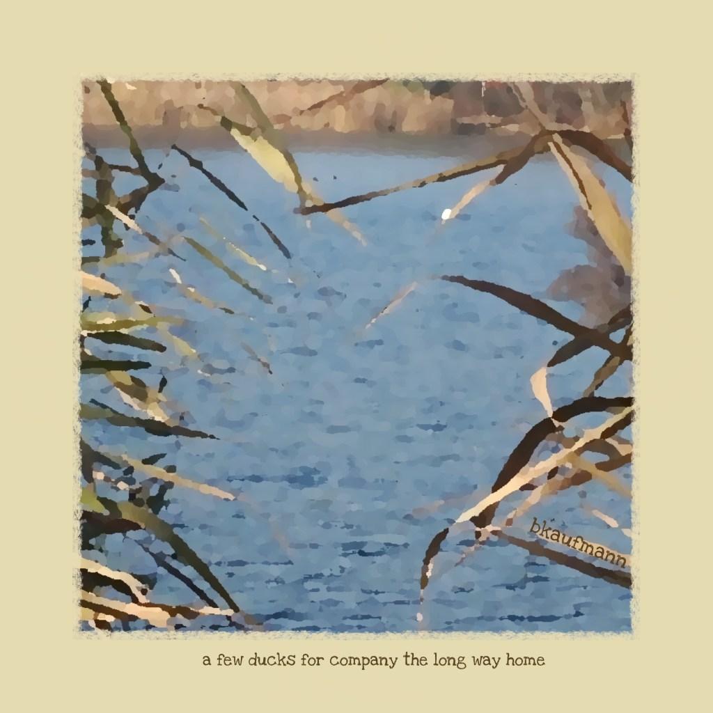 haiga: a few ducks for company the long way home