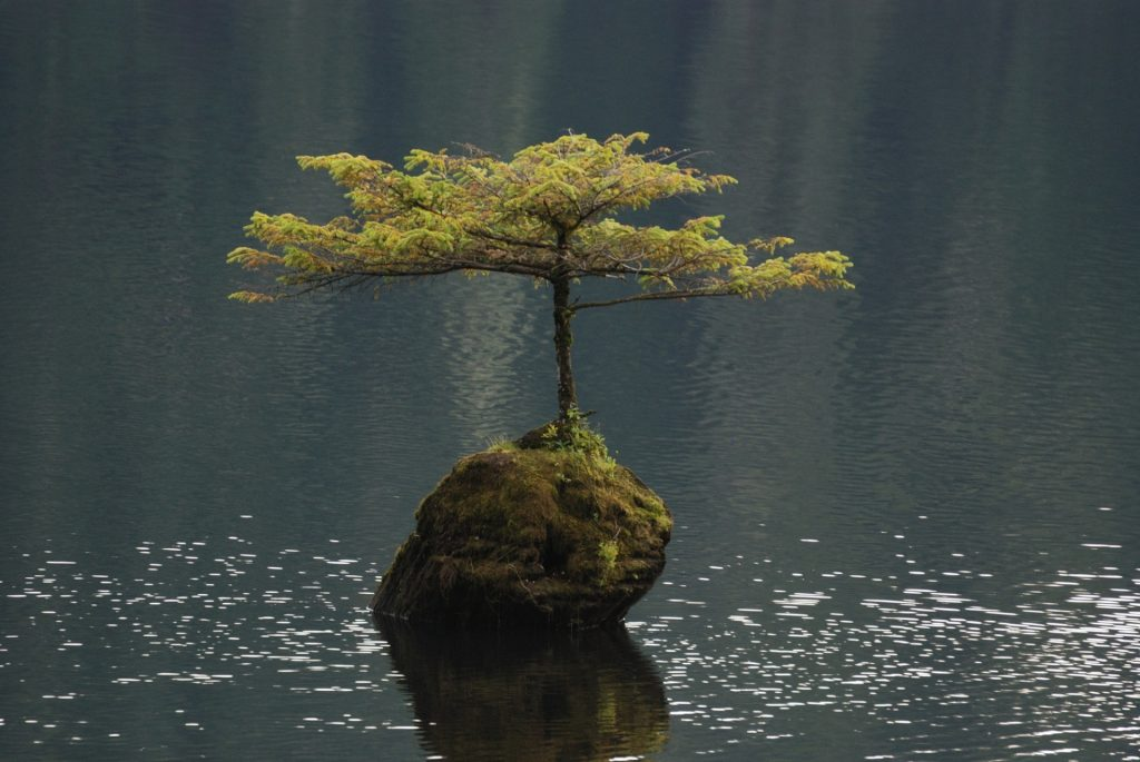 Lone Tree in Fairy Lake, by Jean Beaufort
