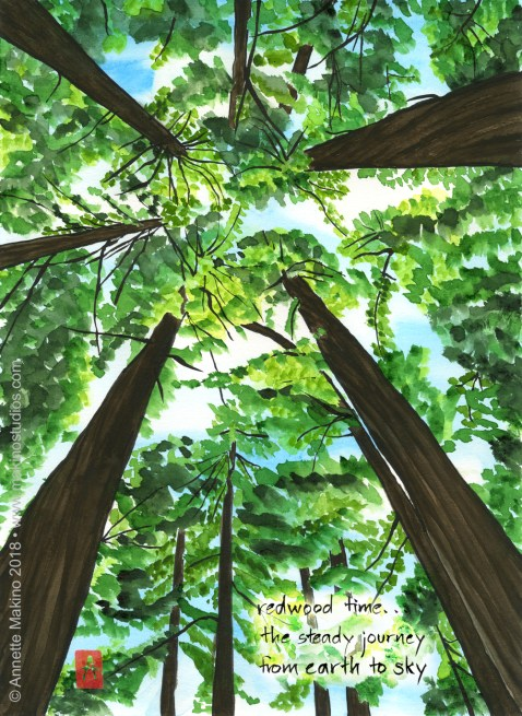 watercolor painting showing a view looking straight up through steep redwood trees