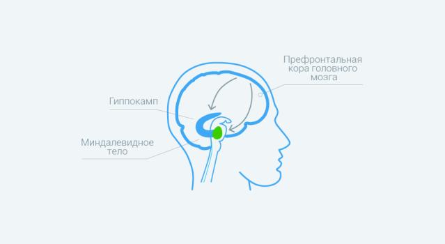Мозг во время депрессии