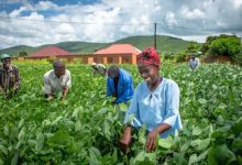 zambia-agriculture-investment-plan-supports-climate-smart-agricultural-development-780x439-1-scaled.jpg?resize=220%2C150&ssl=1
